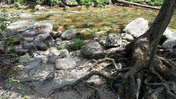 creekrocksroots
